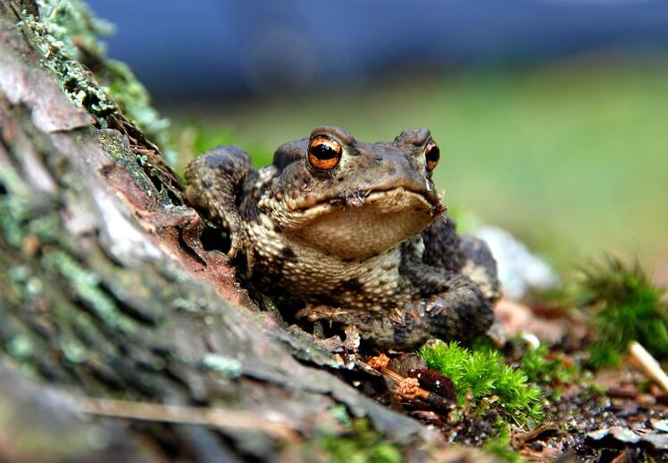 Does Touching Toads Cause Warts?
